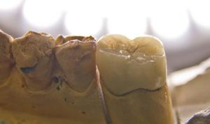 зъботехническа лаборатория варна марин дунев